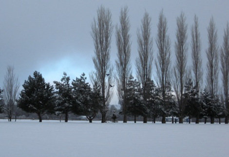 ravens against the snow