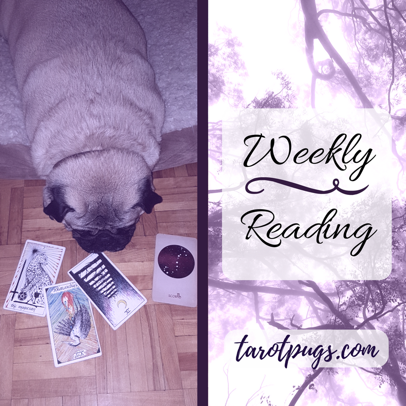 TarotPugs Tarot Pugs Weekly Reading The Wild Unknown Arcana of Astrology