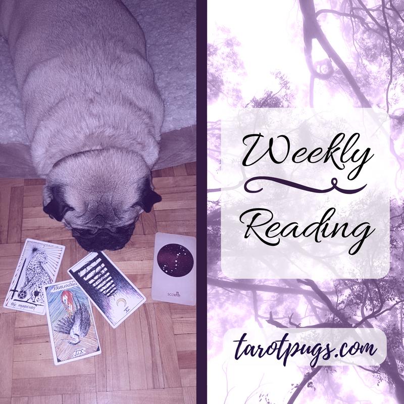 TarotPugs Tarot Pugs Weekly Reading The Wild Unknown Arcana of Astrology